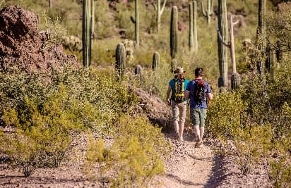 Two hikers walk on a desert path lined with cacti
